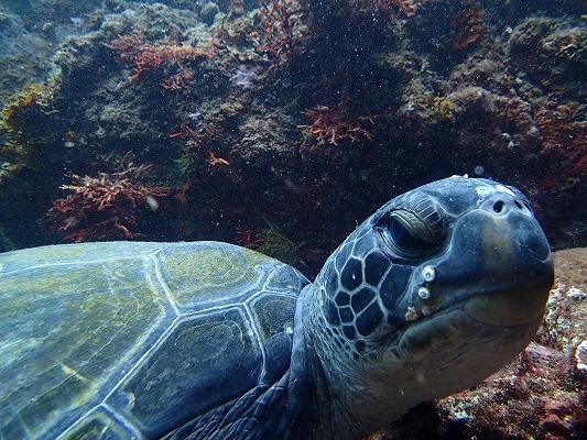 ウミガメの住む海へ♪♪【体験ダイビング】14300円(税込)~10歳から体験可能...