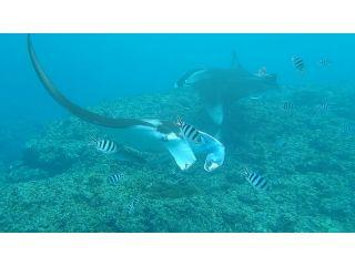 マンタ&自然再生した100%サンゴ礁シュノーケリングツアー