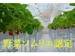 イチゴ園内