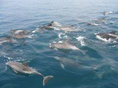 イルカの群れは圧巻です。