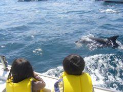 イルカの機嫌が良ければこんなに近くで見られるかも。小さいお子様でも安心。サイズ豊富なお子様ライフジャケット完備。