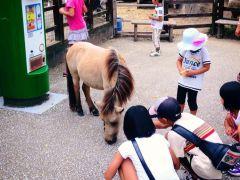 ふれあい動物園には山羊やポニー等がいます。エサをあげたり動物とふれあうことが出来ます。