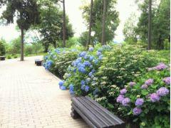 園内散策しながら四季折々の花をお楽しみください◎