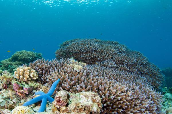 【サンゴの海で潜ろう♪】★串本で体験ダイビング★(約2時間半)