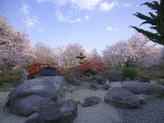 春は桜が満開!桜の絶景を独占できちゃうお花見温泉