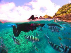★餌付けをすれば熱帯魚に囲まれる竜宮城体験♪