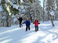 北海道ならではのフカフカなパウダースノーが広がる原生林をのんびり散策!