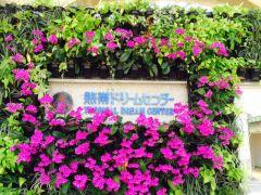 熱帯ドリームセンター♪