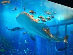 美ら海水族館♪
