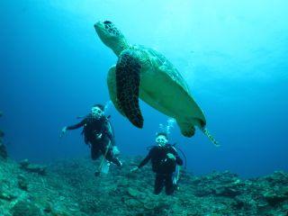 カメにも出会える場合もありますよ♪沖縄の海を思いっきり満喫しましょう♪