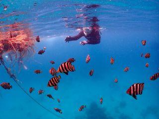 伊豆の海のベストシーズンの夏から秋にかけては小魚の群れに囲まれます!