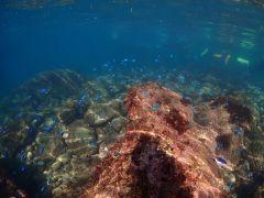 浅瀬にはコバルトブルーのお魚がキラキラしています!