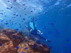 水面近くでも潜るとこんなに魚がたくさん見られます!