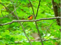 春から初夏は特に野鳥の多い季節