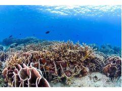 鹿児島本土最大級のサンゴの群生!