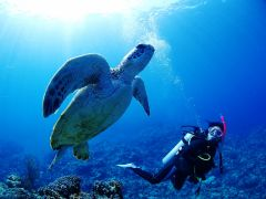 ★世界が恋する海・1日プランでしか行けない慶良間諸島ミシュランエリア♪