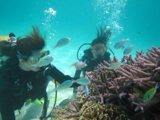 石垣島の綺麗な海で遊びませんか?初心者の方でも安心して楽しめます!!