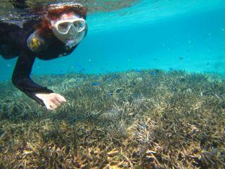 石垣島の美ら海でシュノーケリングで癒されましょう♪