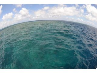 日本最大級 八重干瀬のサンゴ礁でのボートファンダイビング