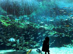 九十九島湾大水槽