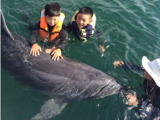 イルカと一緒に泳いでみよう!