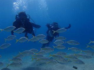 水中ではお魚さんがお出迎えしてくれますよ~!!