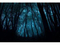 霧に覆われた朝方の森。時間と天気によっては神秘的な森の姿に出会えるかも。