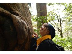 森には巨木が沢山。 大きな巨木が私達を出迎えてくれます。