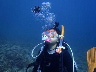西伊豆土肥の海は、年間を通して穏やかです。体験ダイビングとはいえ、いろいろな生物を見ることができます