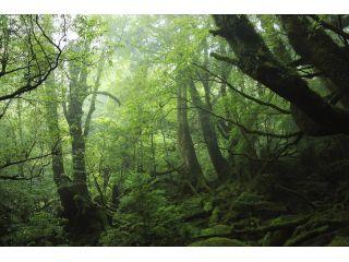 屋久島を代表する白谷雲水峡の苔むす森を目指します。