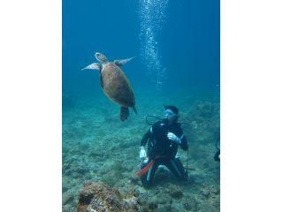 1日コースの目標はウミガメに会うこと!自然相手なので必ず逢えるとは言えませんが、高確率で逢ってもらえます♪