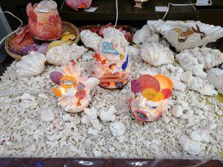 【地域共通クーポン対象】【癒しのサンゴランプ作り】那覇でここだけ!自分へのお土産に人気NO1