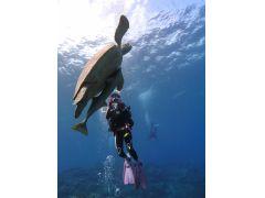 ウミガメを激写!!