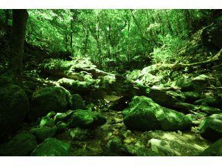 まるでおとぎの世界、原生林歩道