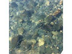 長良川の川色がお出迎え☆