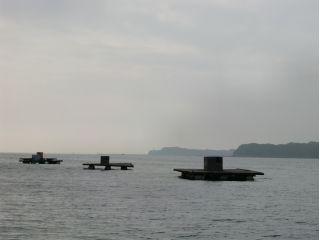 イズム 筏 いかだイズム+ ブログ エサ市場えさきち 三重県南勢 東紀州の釣具・釣りエサ屋