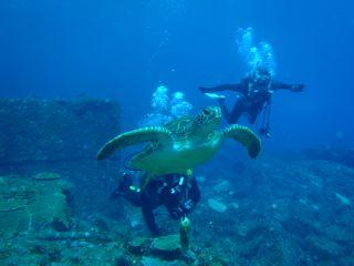 【地域共通クーポン対象】ファンダイビング〜「八丈ブルー」の水中世界とダイナミックな地形をお楽しみください。
