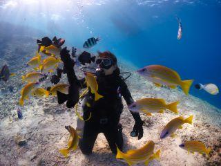 沖縄の美ら海でダイビング体験