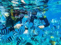 沢山の熱帯魚に囲まれる、餌付け体験つき。