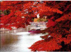秋には見事な紅葉もお楽しみ頂けます☆★