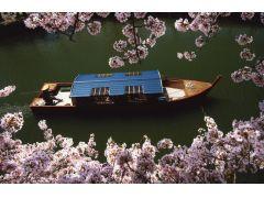 船窓からは彦根城の四季折々景色が流れてゆき、屋形船は最高のお座敷です。