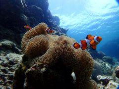 海の生き物もたくさん☆テレビでしか見た事のないようなお魚にも沢山出会えるかも!