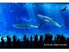 沖縄美ら海水族館入館チケットで2倍楽しもう!