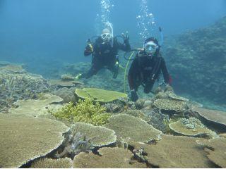 港か出て3分の「潮崎コーラルガーデン」には足の踏み場も無く広がるサンゴ群が。圧巻の光景です。