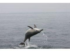 イルカの背面ジャンプ