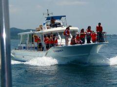 安心安全快適なイルカ専用船でのイルカウォッチング