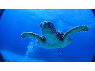 【地域共通クーポン対象】水中写真・動画無料プレゼント!慶良間半日体験ダイビング(1ダイブ)コース
