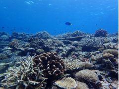 サンゴも生き生きと
