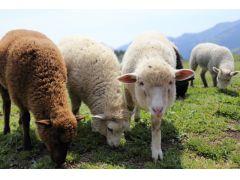 近くの牧草地には可愛い動物達がいることも...