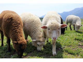 広い牧場のなかでのびのびとBBQを楽しみましょう!